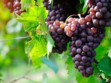 Winestar® propose une gamme de vins français issus des meilleurs domaines dans les appellations les plus prestigieuses, dans un format moderne, tendance et écologique - image 2