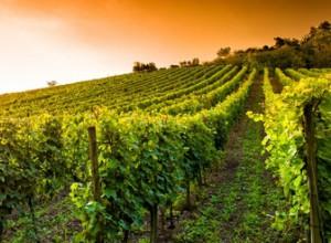 Vin en canette.Gamme de vins français premium en canettes. - présentation 2