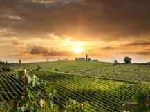 Dégustations privatives, accords mets et vins, visites guidées groupes et individuelles, excursions et séjours - image 3
