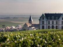 Notre vignoble est composé de trois cépages : le chardonnay, le pinot meunier et le pinot noir - image 4